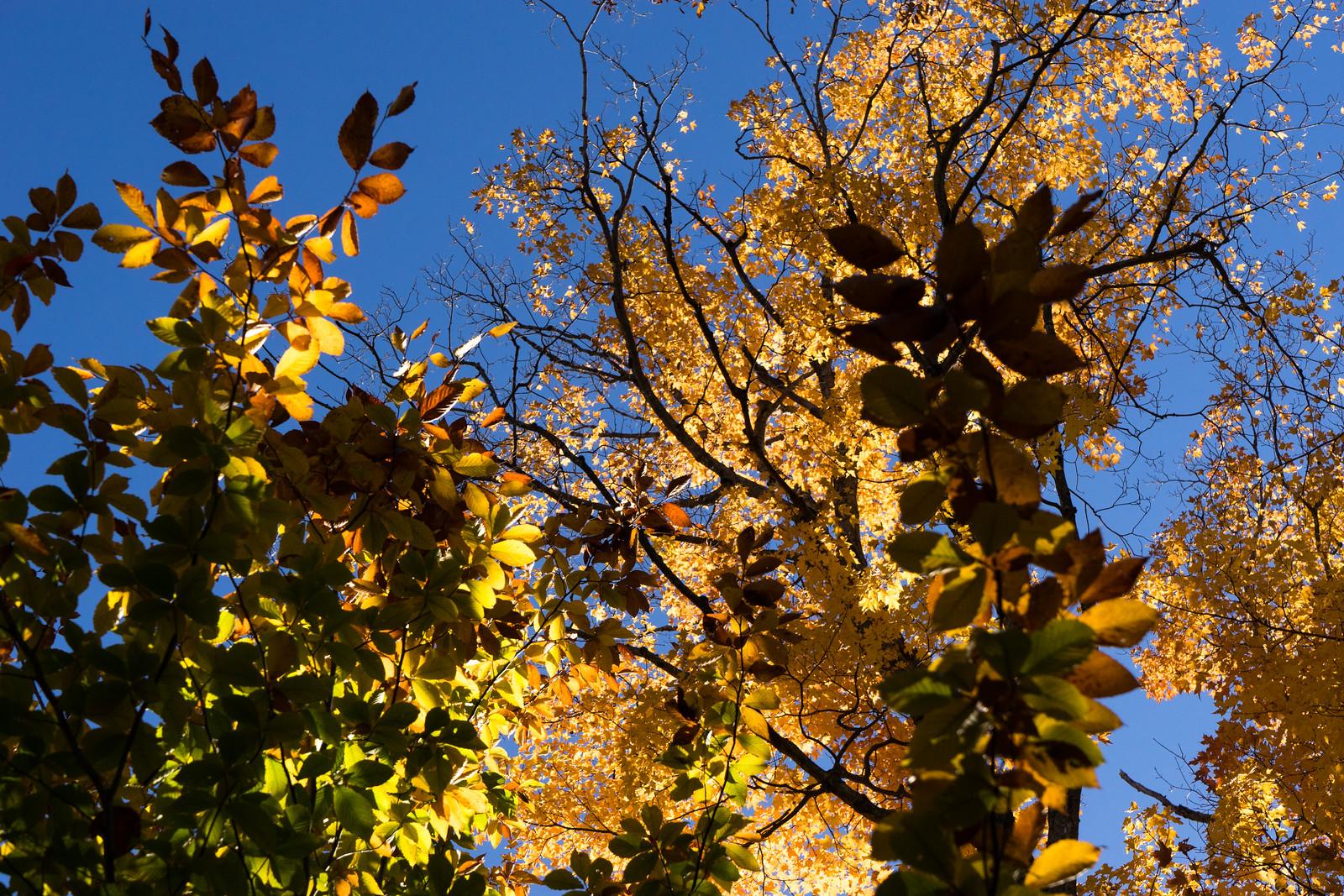 Les couleurs de l'automne lors d'une randonnée au Mont-Orford, par Côté Hublot