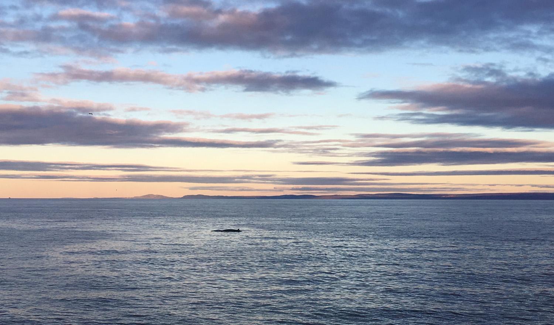 L'observation des baleines depuis le Cap du Bon-Désir - Côté Hublot
