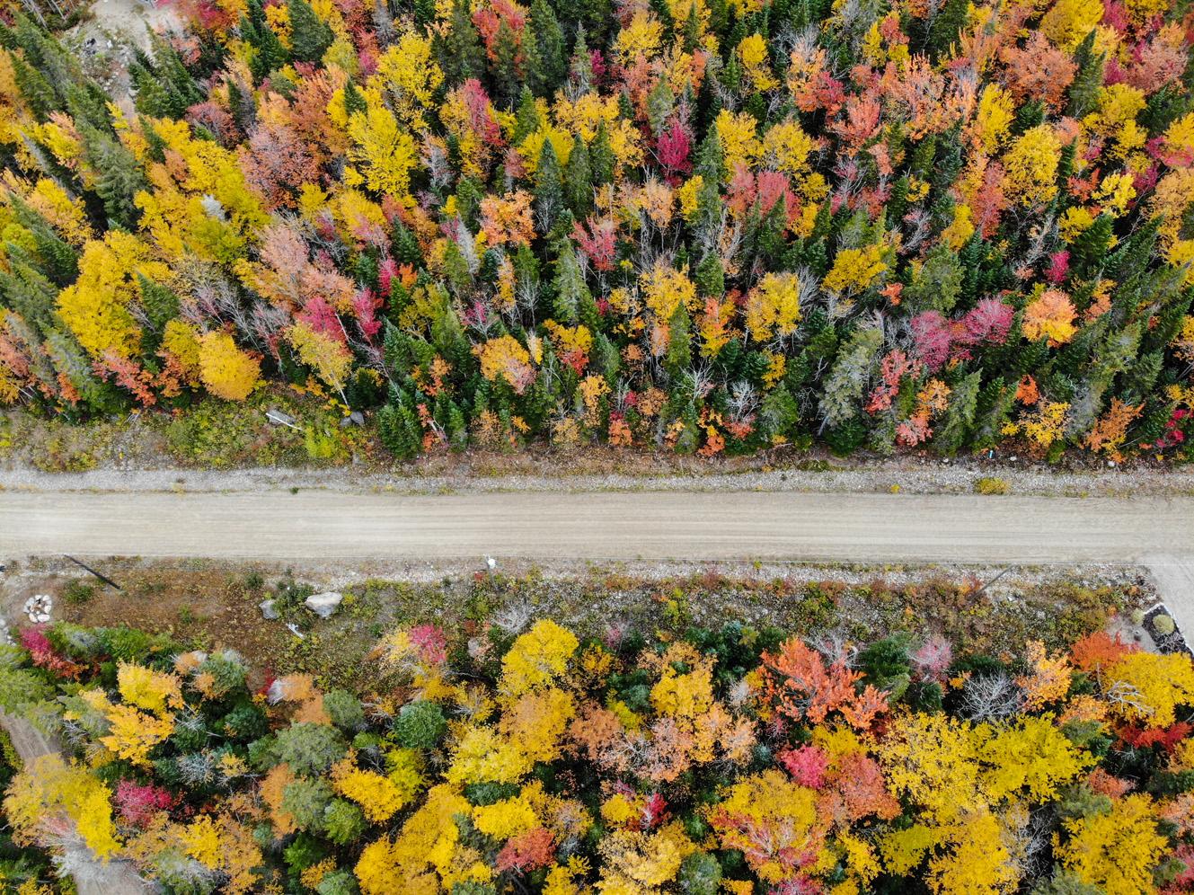La région de Charlevoix, Québec, vue du ciel - Forêt d'automne - Côté Hublot