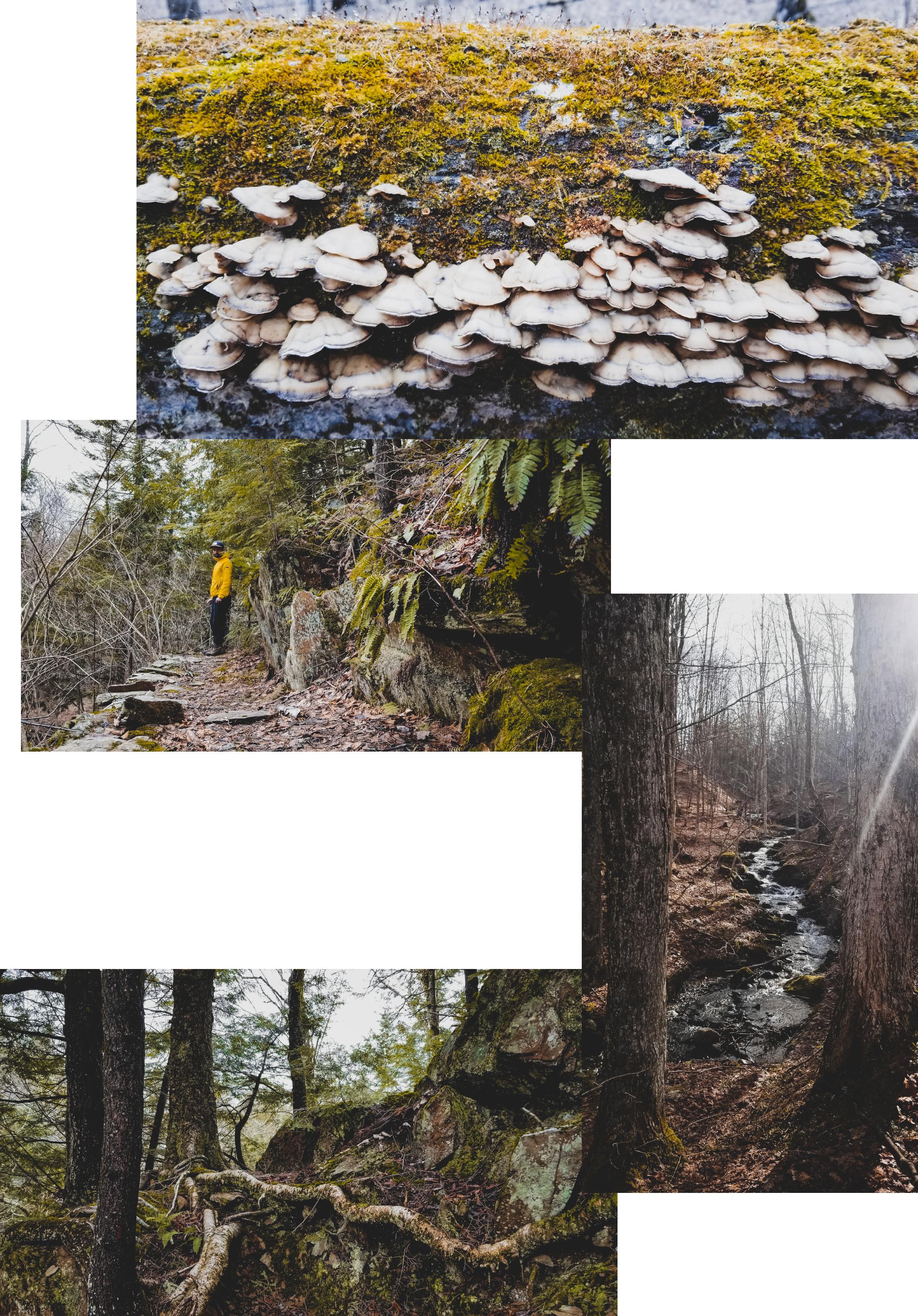 Entre Comes et Racines, en forêt, par Côté Hublot