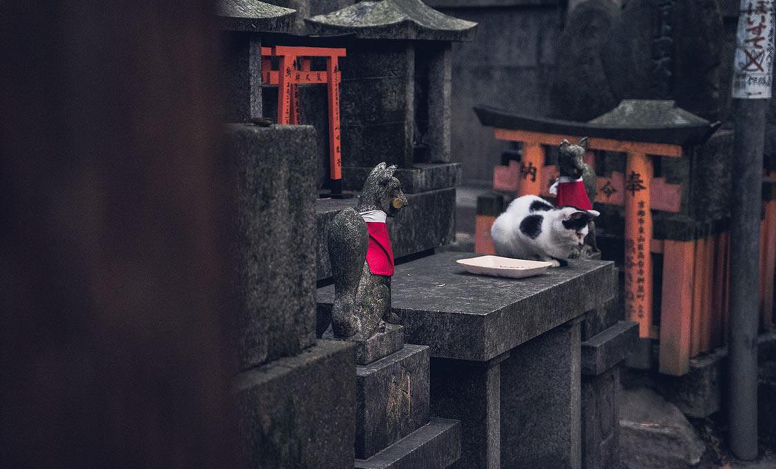 Chat au coeur du sanctuaire shinto Fushimi Inari-taisha, à Kyoto, par Côté Hublot