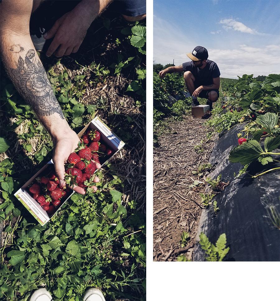 Auto-cueillette de fraises sur l'Île d'Orléans, par Côté Hublot