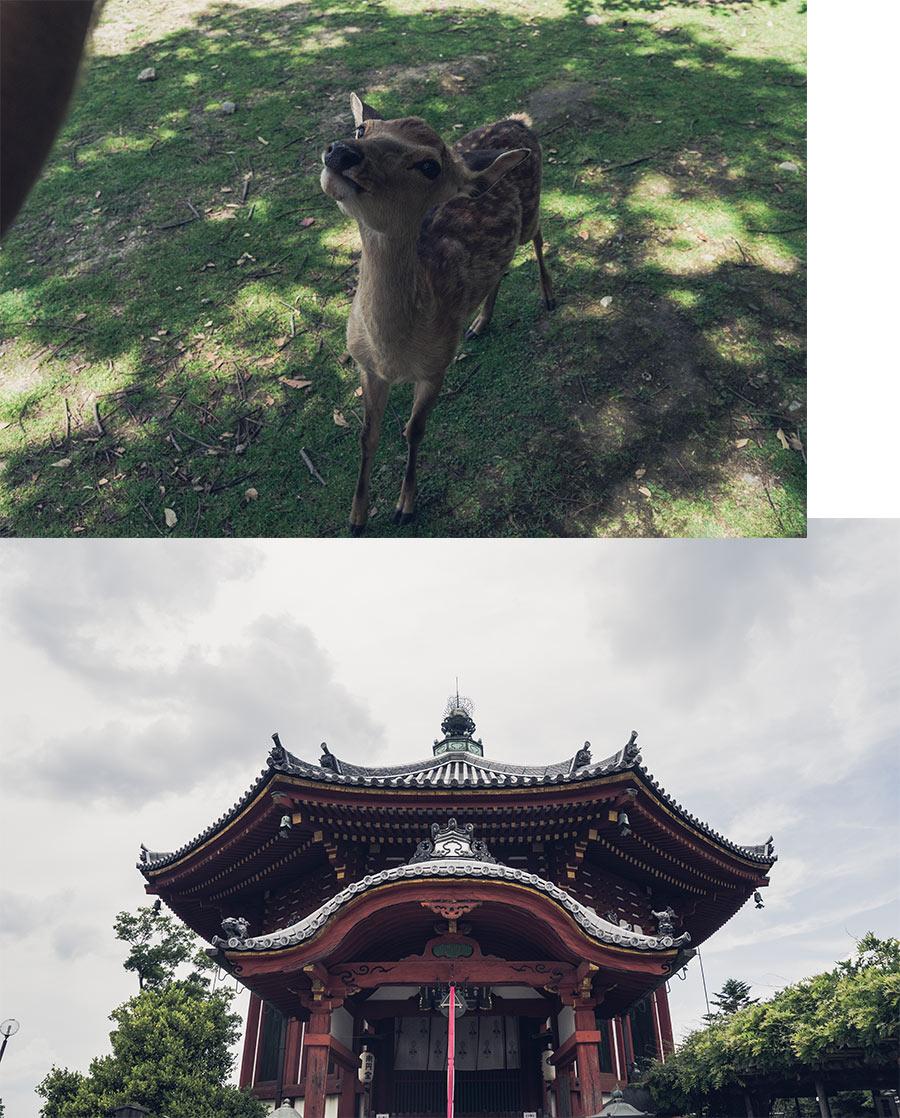 Les daims de Nara et une pagode, par Côté Hublot